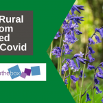 Photo of bluebells with title of blog - How Rural Wisdom learned from Covid
